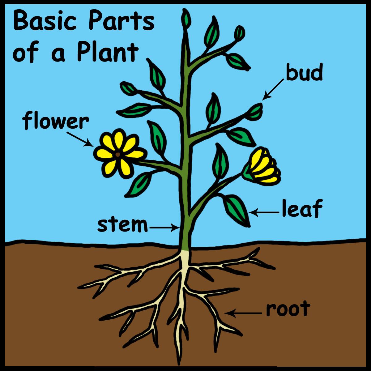 1200x1200 Plant Clipart Simple