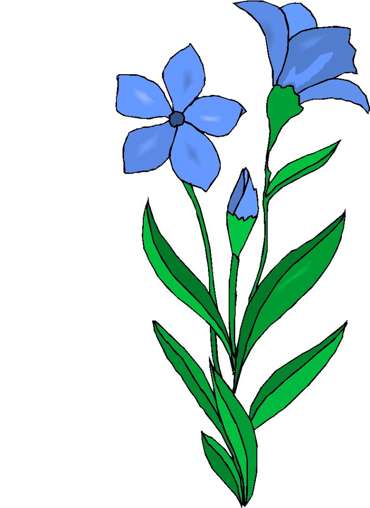 749x1027 Plants And Flowers Clipart