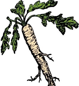 329x357 Salsify Food Plants Root Clip Art Free Vector In Open Office