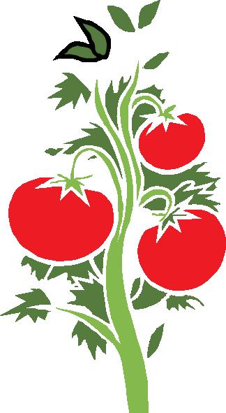 324x591 Tomato Plant Clip Art