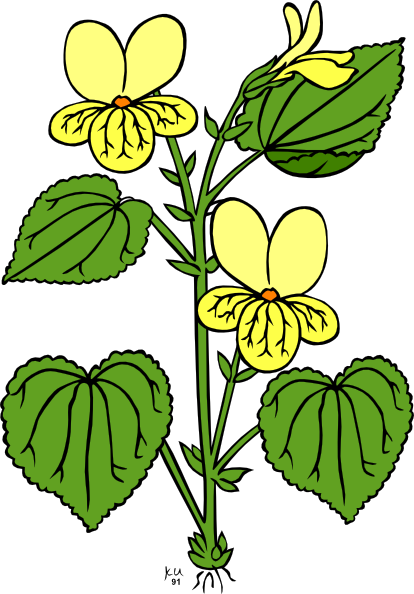 414x594 Floral Plant With Green Leaves Clip Art Free Vector 4vector