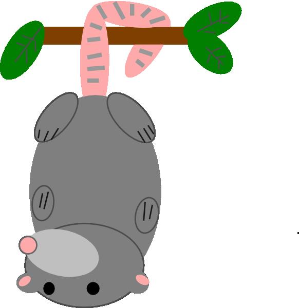 582x600 Platypus Clipart Australian Possum