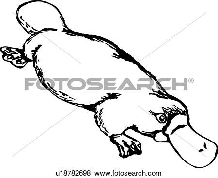 450x366 Platypus Clipart Drawing