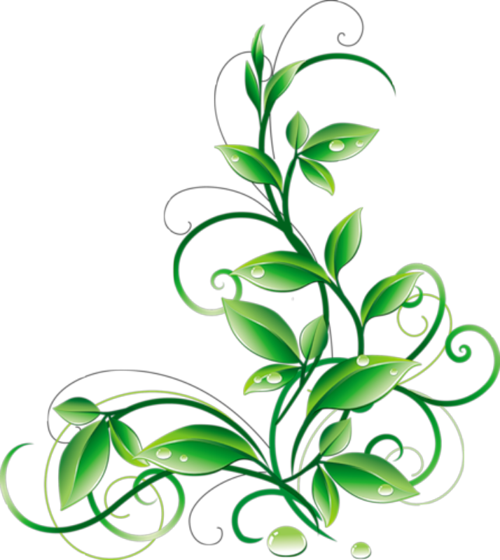 714x800 Floral Green Leaves And Water Droplets Png Clipart