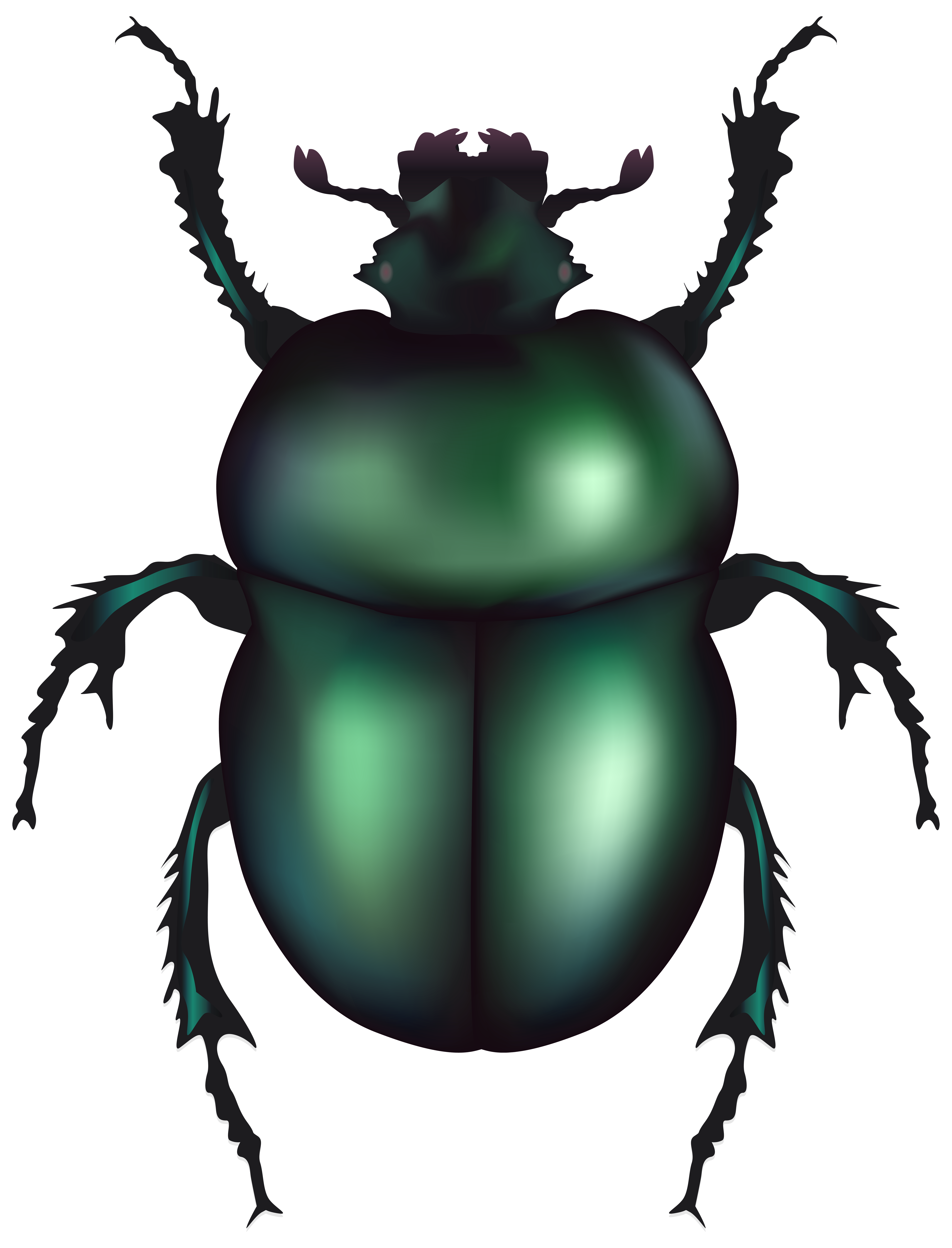 6101x8000 Green Rose Chafer Beetle Png Clip Art