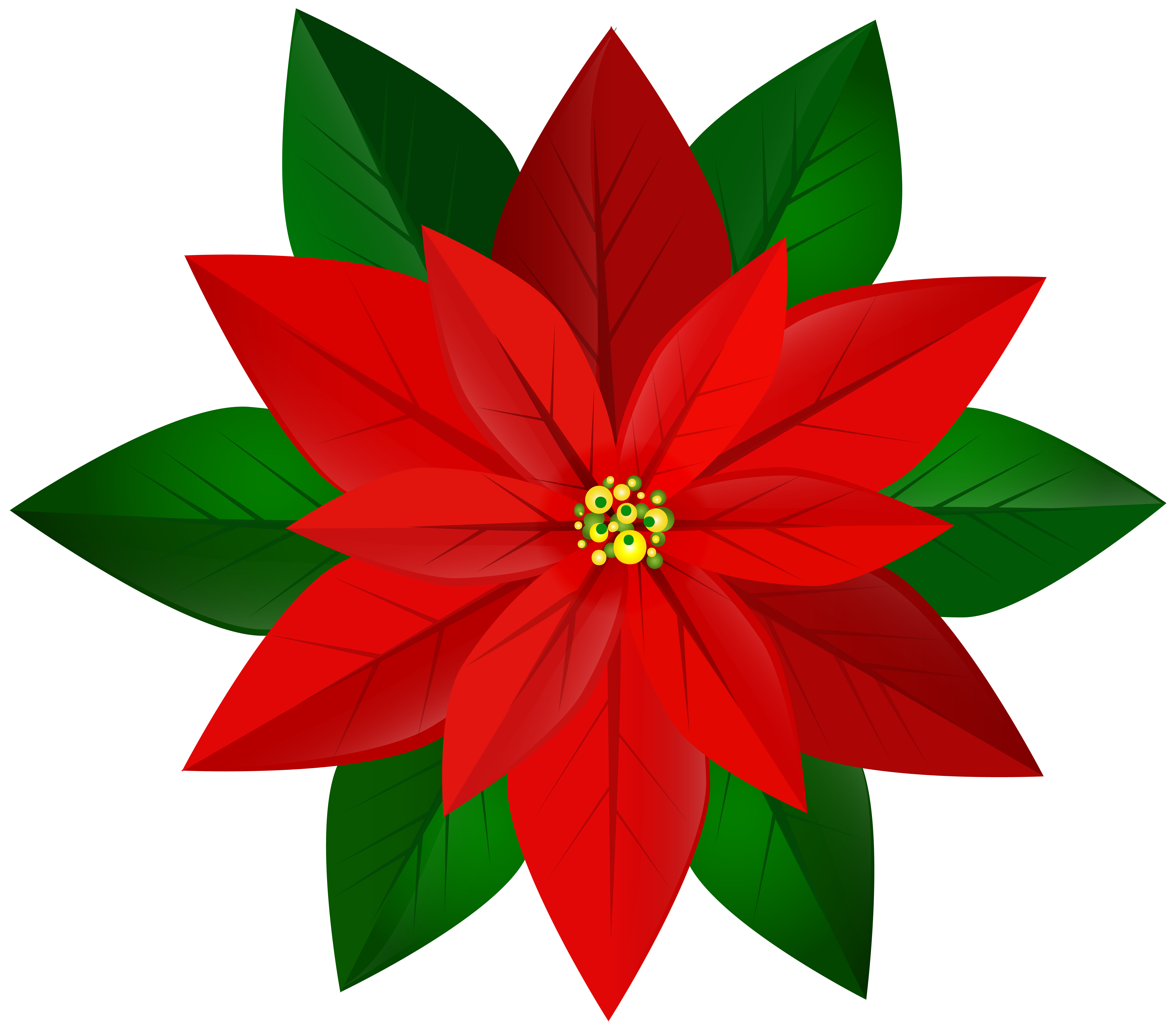 8000x7003 Christmas Red Poinsettia Png Clip Art Imageu200b Gallery