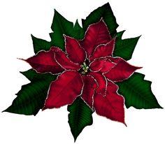 236x206 Free Clip Art Borders Poinsettia Christmas Poinsettia Flower