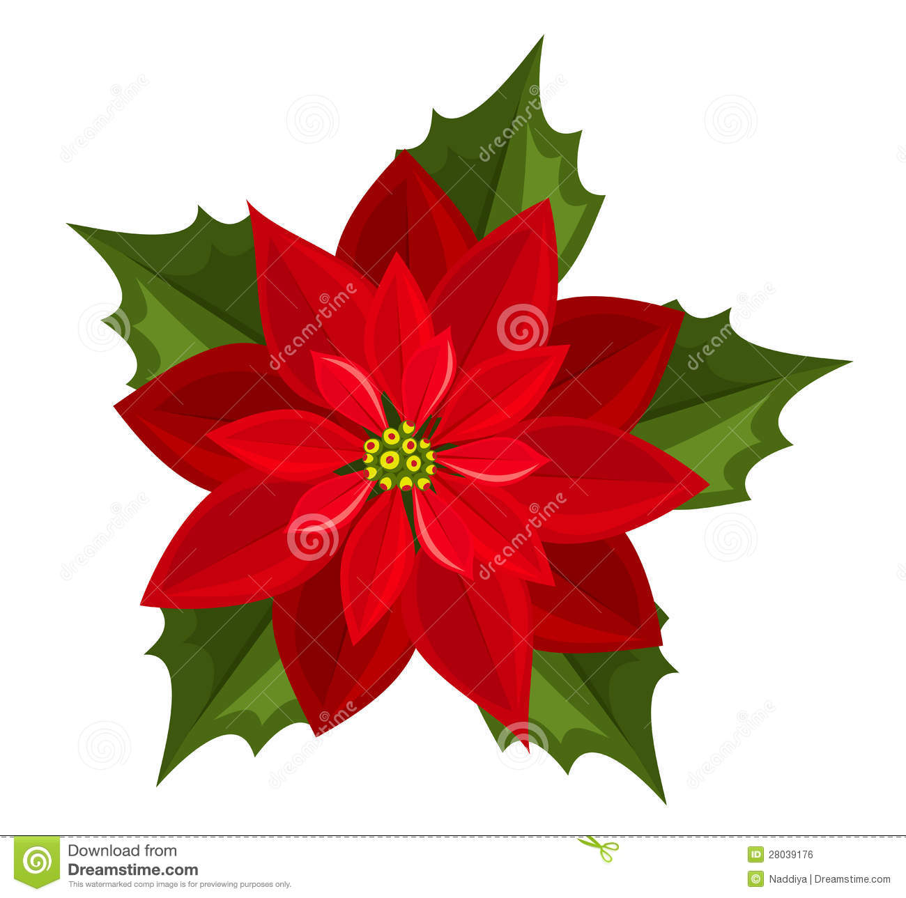 1300x1289 Free Images Of Poinsettia Flowers
