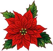 170x165 Poinsettia Clipart Free