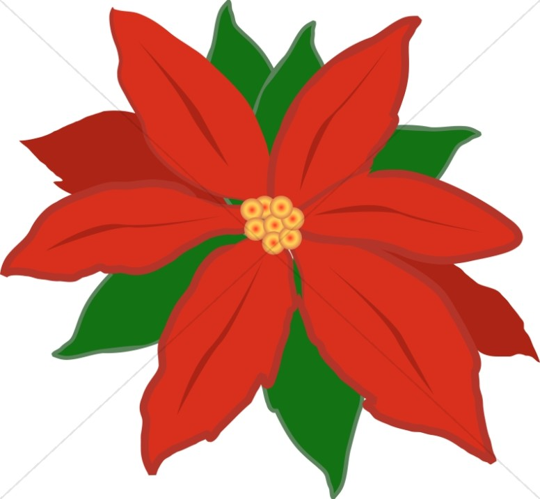 776x717 Poinsettia Clipart Leaf
