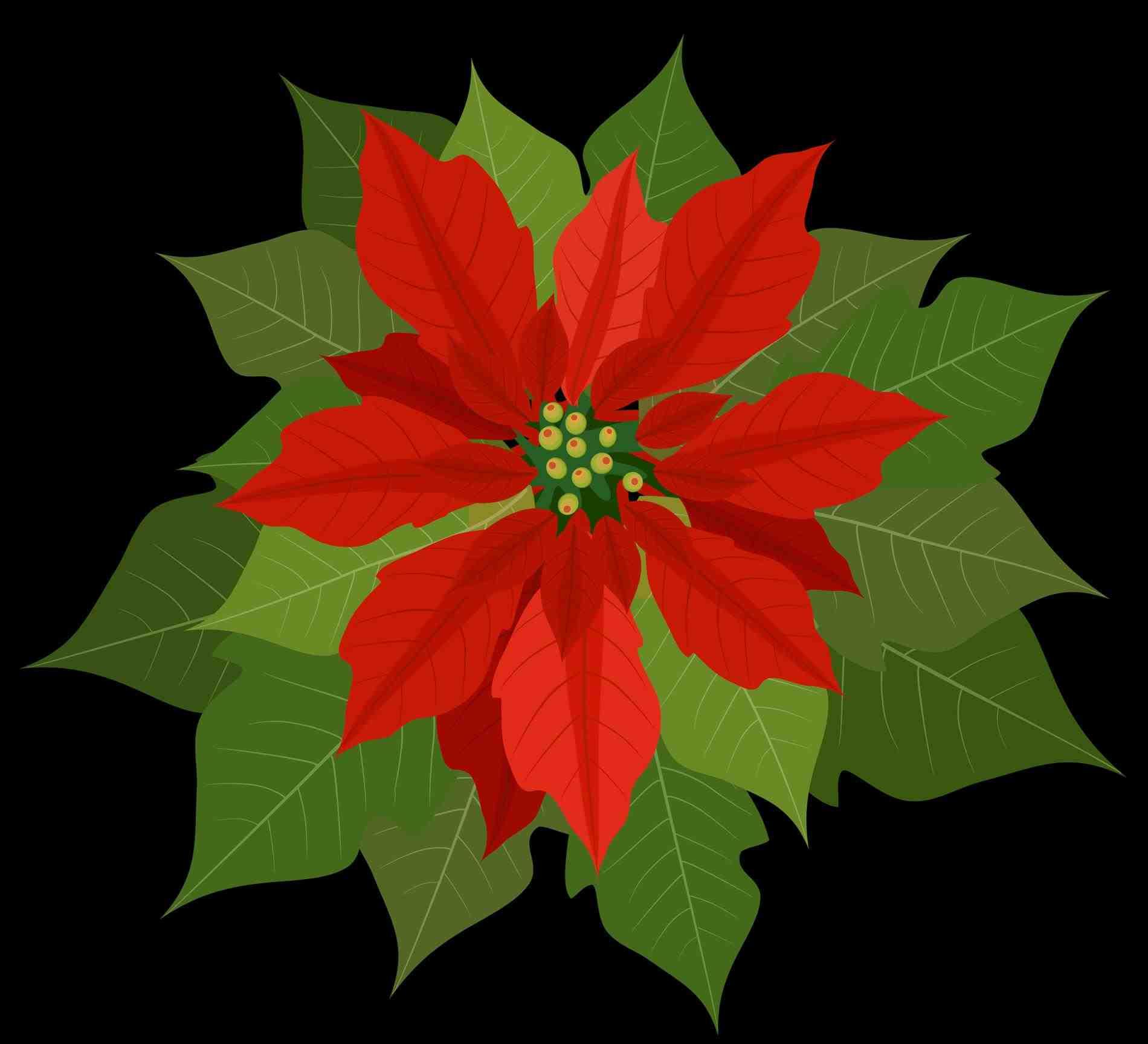 1900x1729 Wreath Round Frame Blank Stock Illustration Floral Christmas