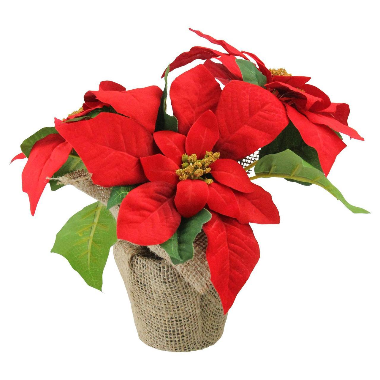 Poinsettia Flower Pictures