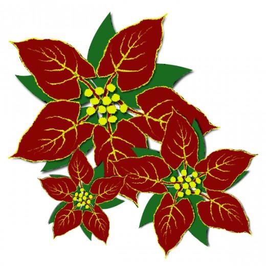 520x520 Poinsettia Clipart Poinsettia Plant