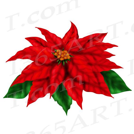 570x570 50% Off Poinsettia Clip Art Clipart Red Poinsettia Diy