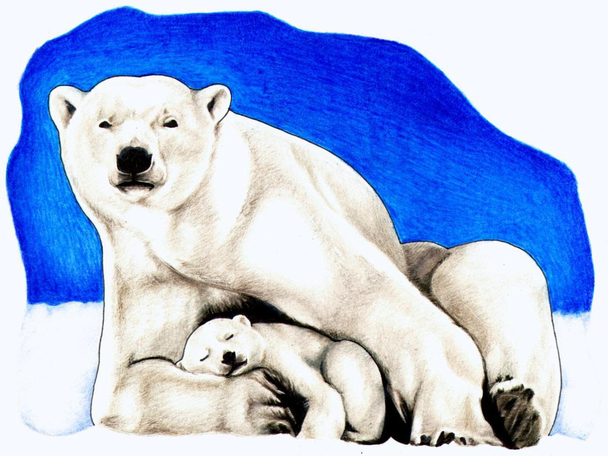 Polar Bear Clipart