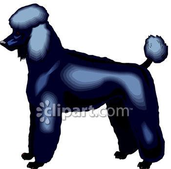 350x347 Dog Breed Standard Poodle