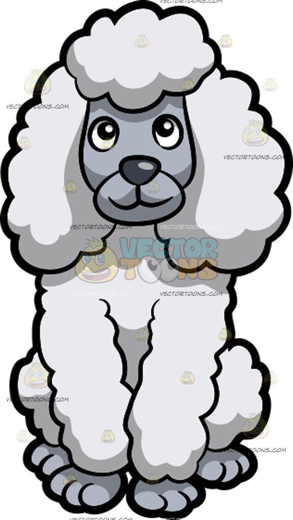577x1024 A Cute White Standard Poodle Sitting Down Cartoon Clipart
