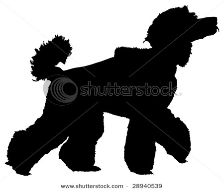 450x385 Picture Of A Standard Poodle Walking With His Head Held High In A