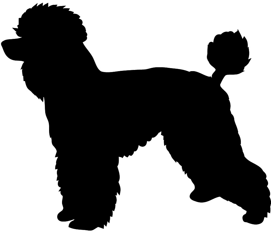 900x773 Poodle clipart realistic dog