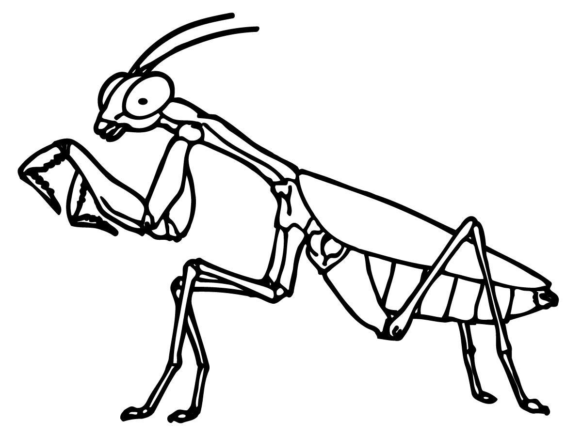 1200x900 Best Hd Mantis Clip Art Praying File Free