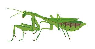 312x160 Top 94 Praying Mantis Clip Art