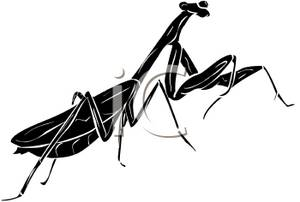 300x202 Clipart Illustration Of A Preying Mantis Shadow