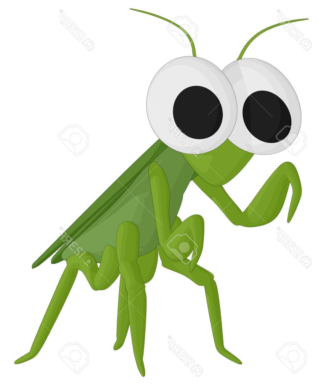 1091x1300 Best Free Praying Mantis Stock Vector Cricket Insect File