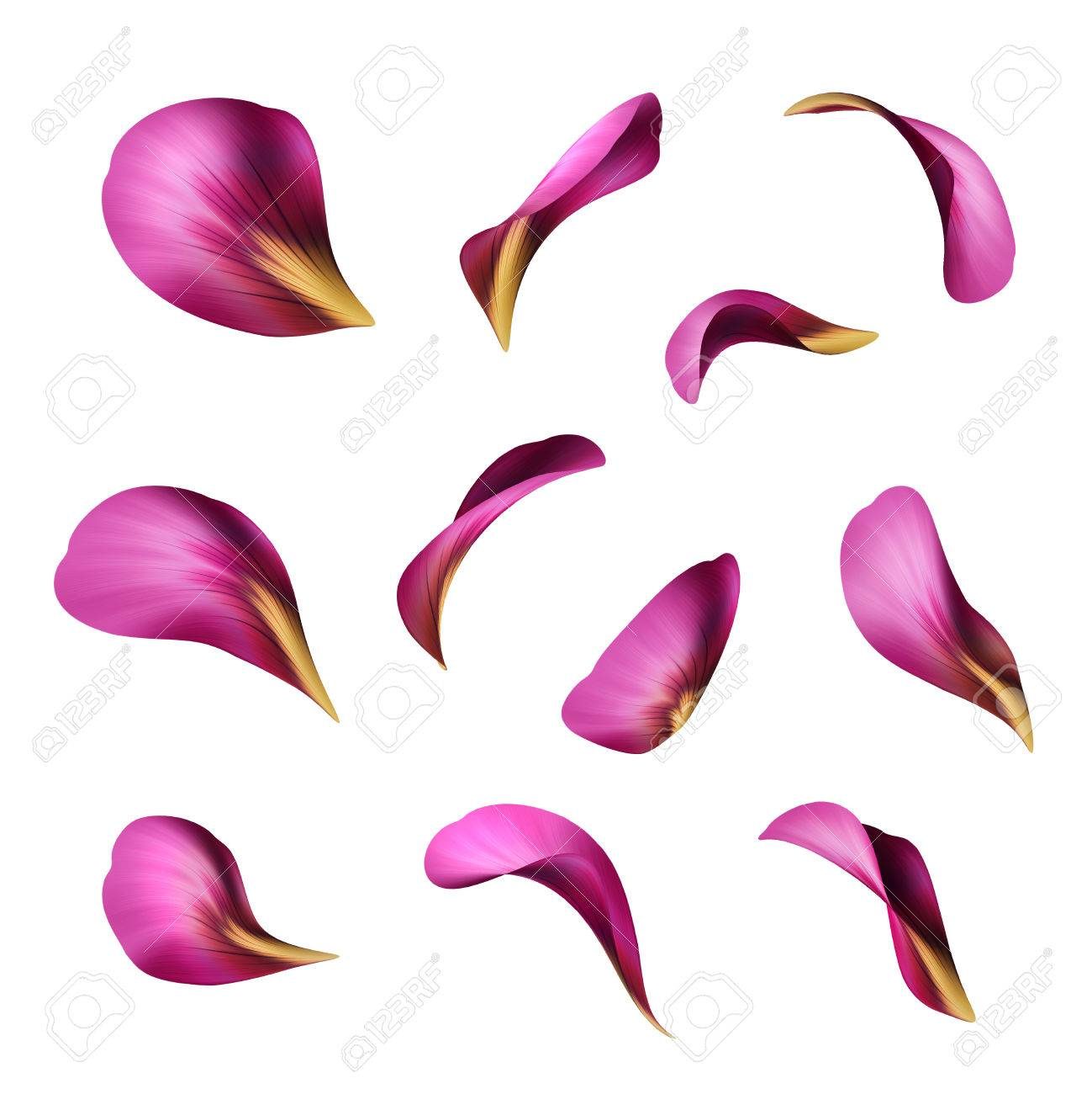 1299x1300 Purple Flower Petals, Botanical Illustration, Floral Clip Art