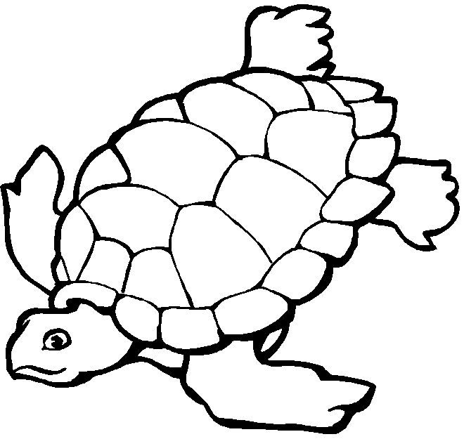 Printable Coloring Pages With Free 1 660x625 Best 25 Ocean Ideas Animals