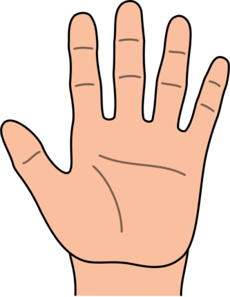 333x429 Draw Hand Clipart Hand Clipart