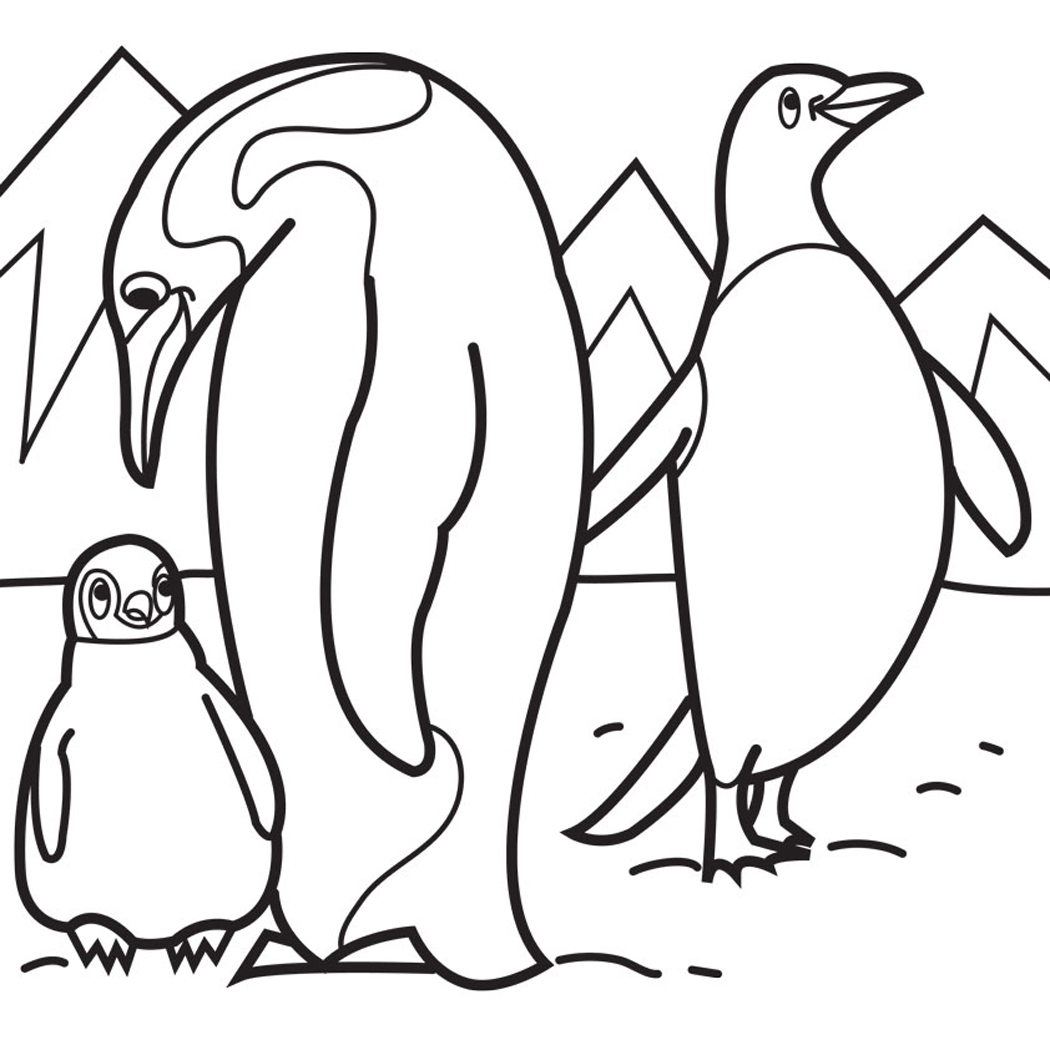 1050x1050 Penguins Diving Coloring Page Northern Rockhopper Penguin Baby