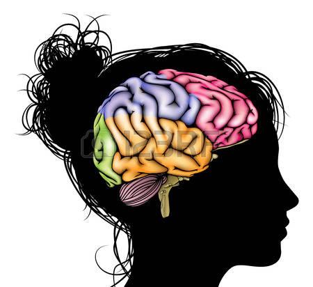 450x412 Brains Clipart Psychologist