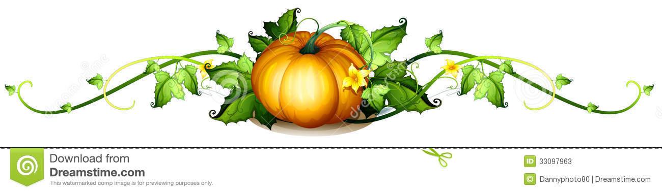 1300x380 Squash clipart pumpkin vine
