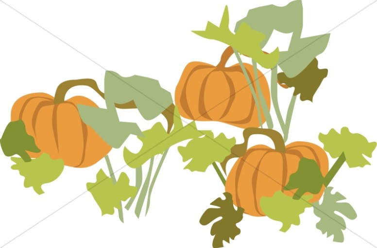 776x512 Pumpkin Clipart Leafy Vegetable
