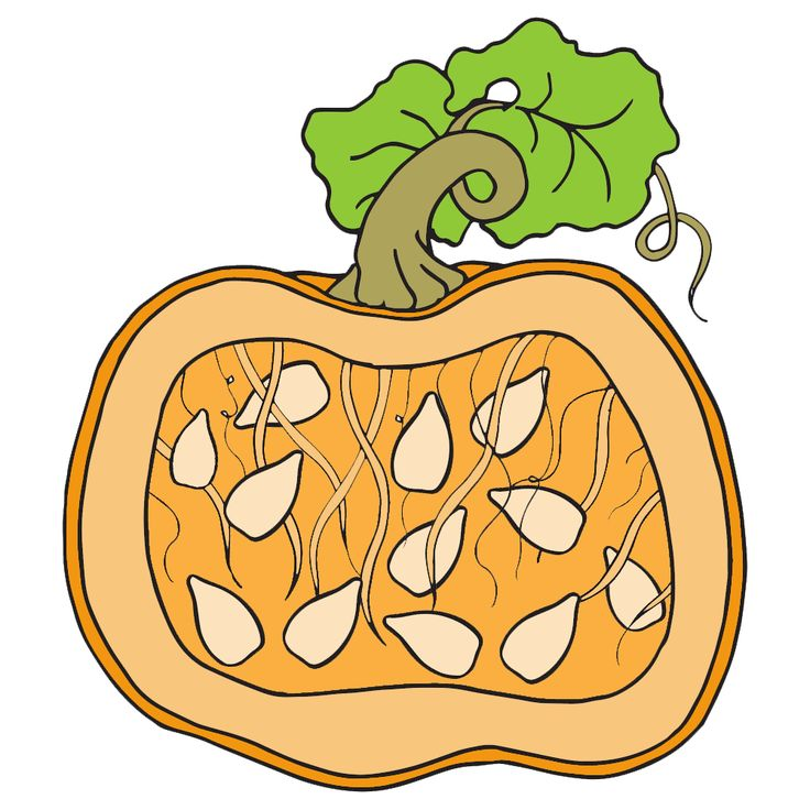 736x736 The Best Parts Of A Pumpkin Ideas Pumpkin Parts