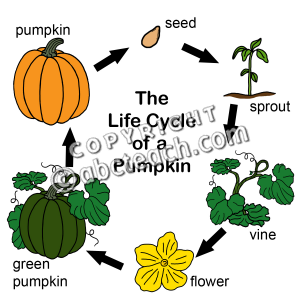 300x300 Life Cycle Of A Pumpkin