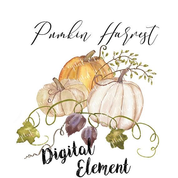 570x570 Pumpkin Watercolor Clip art Pumkin and Fall Harvest Clip art