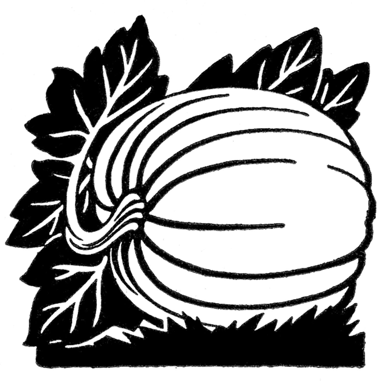 1500x1498 Pumpkin black and white pumpkin clipart black and white vines free