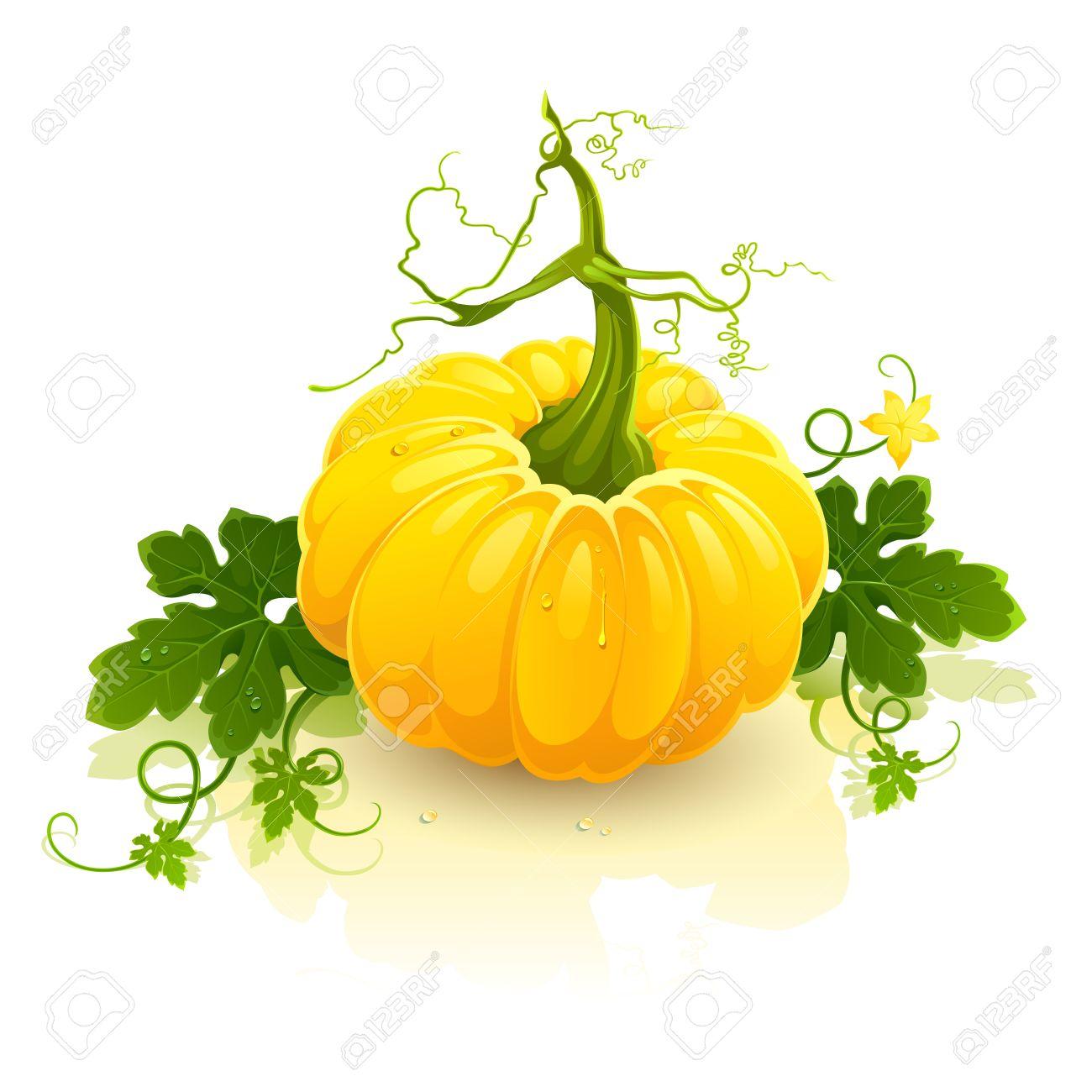 1300x1300 Yellow Pumpkin Clipart