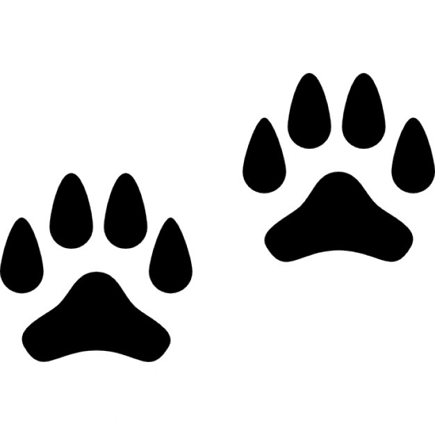 626x626 Dog Paw Vectors, Photos And Psd Files Free Download