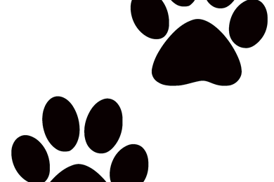 390x260 Pawprint Backgrounds Wallpapers