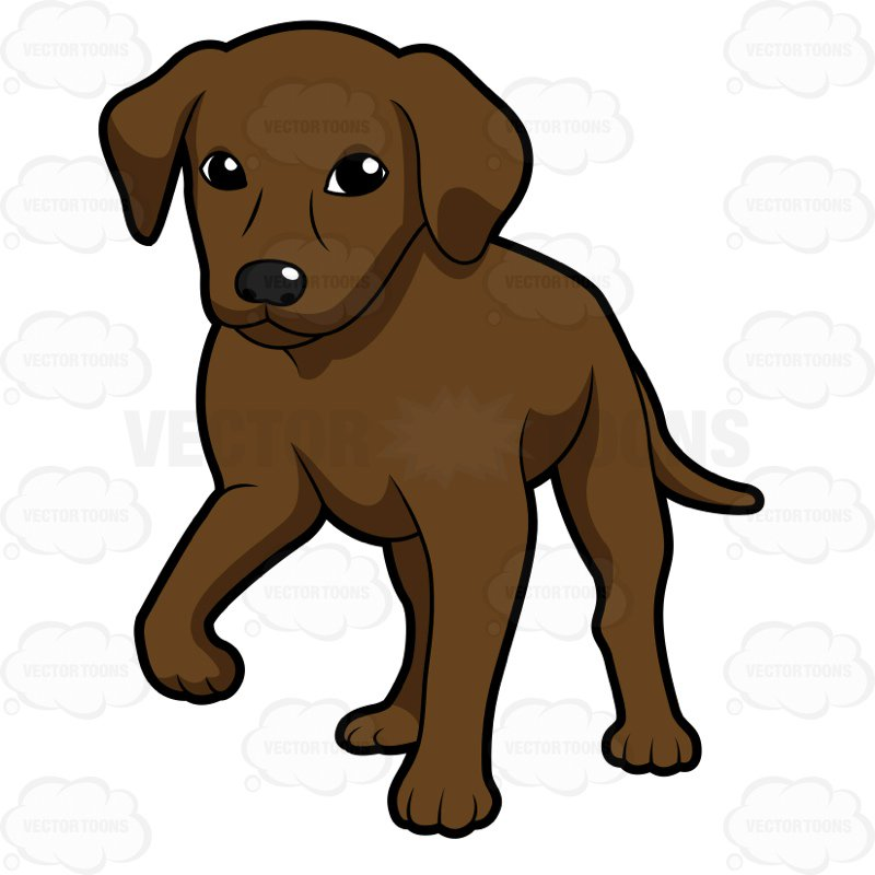 800x800 Chocolate Brown Labrador Puppy Standing With One Paw Up Cartoon