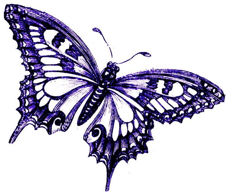 Purple Butterflies Clipart