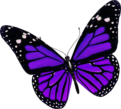400x363 Purple Butterfly Purple Butterfly Butterflies