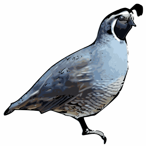 600x600 California Quail Clip Art