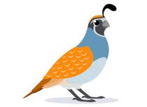 210x153 Quail Clipart Quail Bird