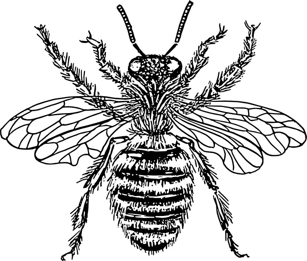 600x510 Bee Queen Clip Art Free Vector In Open Office Drawing Svg ( Svg