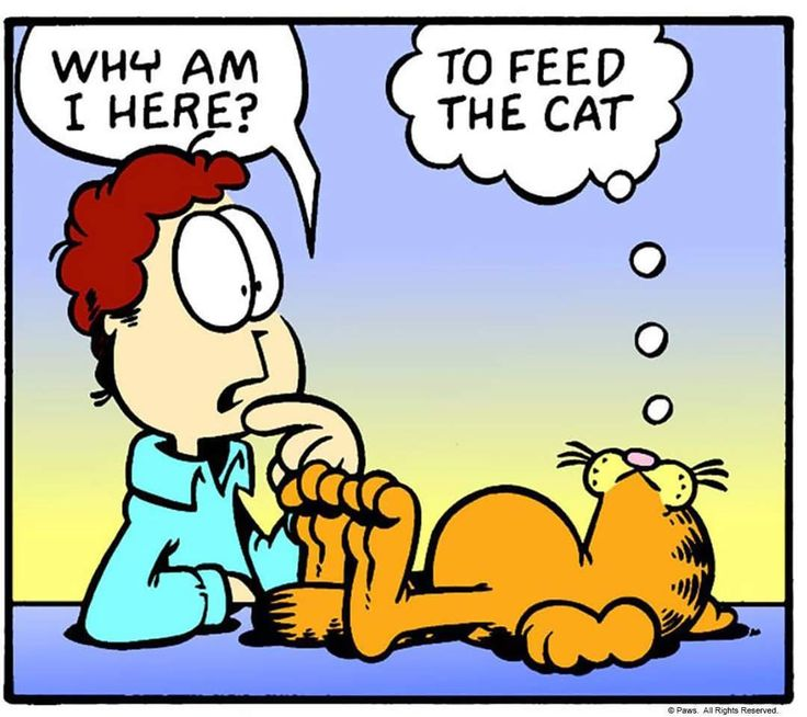 736x654 111 Best Garfield Images Friends, Cartoon And Funny