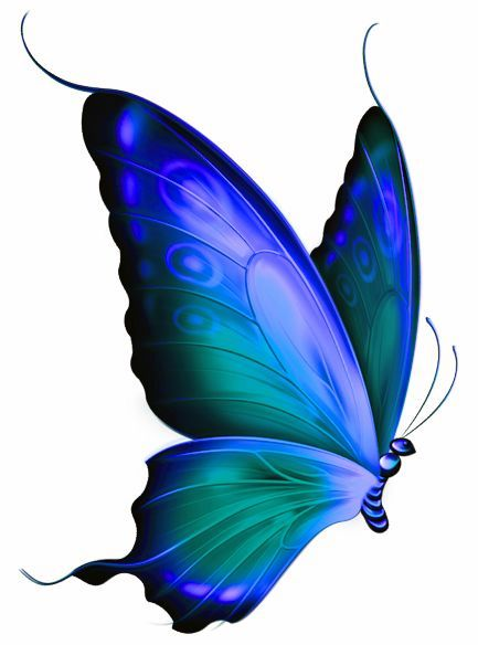 433x584 Pin By Michele Eugenta On Michele Butterfly