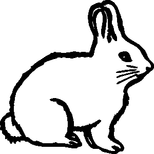 300x300 Cottontail Rabbit Clipart